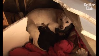 Mama Dog Never Wants To Lose Her Puppies Again (Part 2) | Animal In Crisis EP41