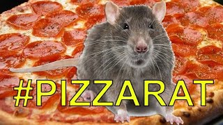 New York PIZZA RAT Desperately Wants To Eat Pizza | What's Trending Now