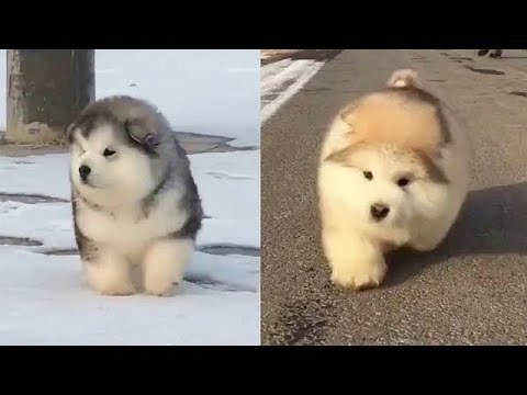 ♥Cute Cats and Dogs Doing Funny Things 2018♥ – Funny Dog and Cat Videos