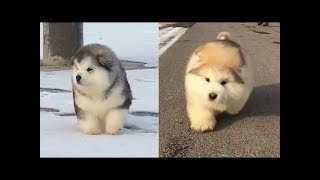 ♥Cute Cats and Dogs Doing Funny Things 2018♥ - Funny Dog and Cat Videos
