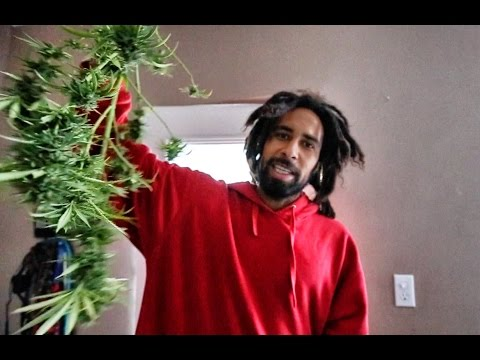 How KNOT to grow WEED!