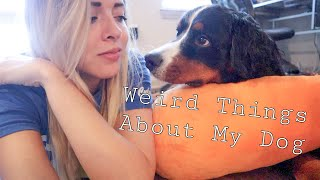 Weird Things About my Bernese Mountain Dog