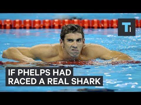 If Michael Phelps had raced a real shark