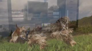 Тоша конкур) собаки-кони прыгают