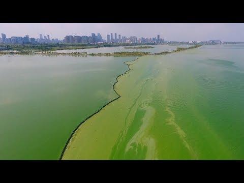 Algae bloom turns eastern Chinese lake surreal green