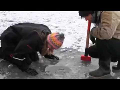 شاهد حياه سكان القطب الشمالي Youtube