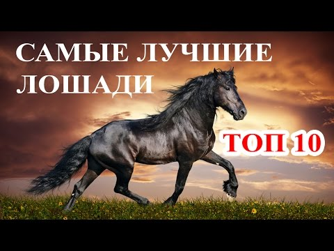 Топ 10 Самые дорогие и лучшие лошади мира. Породы лошадей