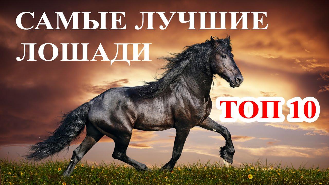 Фотографии лошадей красивые