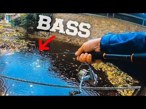 Pescando BLACK BASS En El JARDÍN - LURED TRIP MALLORCA | Lured Vlog 68