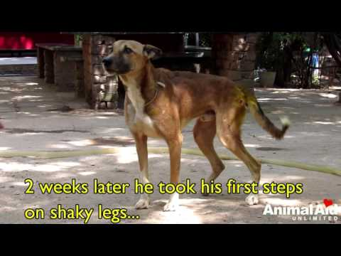 The paralysed dog who never gave up. Sydney's amazing rescue story.
