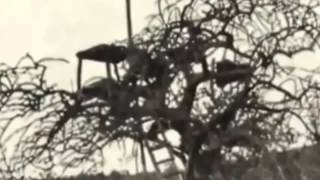 Repeat youtube video Especial Documental de Leones   Los Leones come Hombres    National Geographic