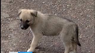 Красноярцу, задушившему собаку на детской площадке, грозит до года тюрьмы