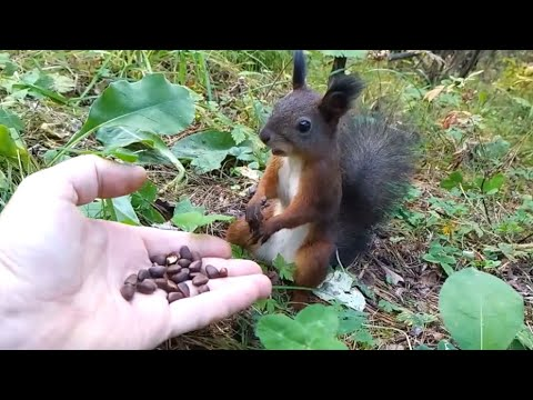 Squirrel Frozen In Time