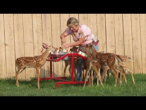 Blackhawk Farm's Fawn Feeder