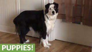 Bratty dog stomps feet when told