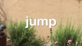 Baby Quail Learn to Jump Off a Wall