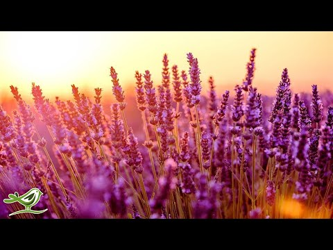 Relaxing Piano Music: Relaxing Music, Study Music, Romantic Music, Sleep Music ★128 music