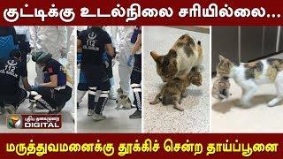 குட்டிக்கு உடல்நிலை சரியில்லை... மருத்துவமனைக்கு தூக்கிச் சென்ற தாய்ப் பூனை..! | Cat | hospital