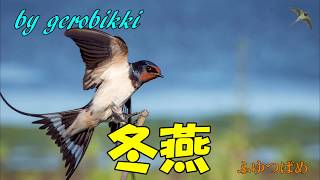 「冬燕」/若山かずさ Japanese Koto 大正琴  /gerobikki