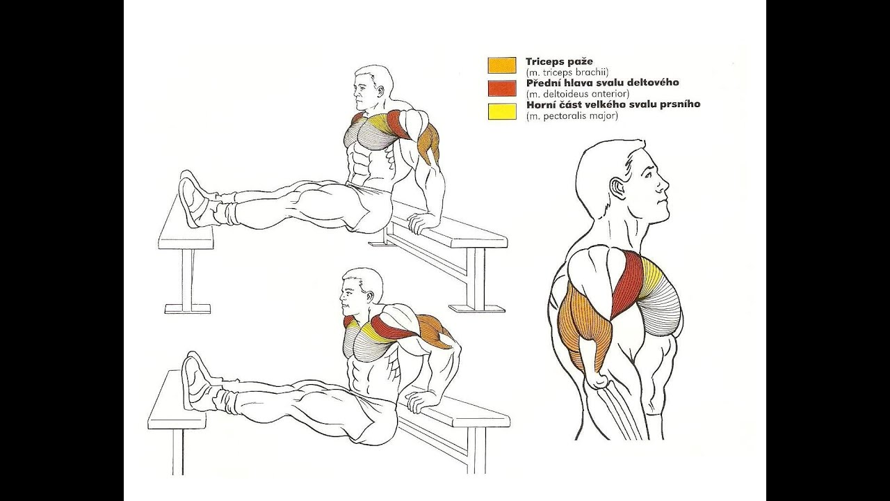 Workouts Amp Muscle Building Exercises