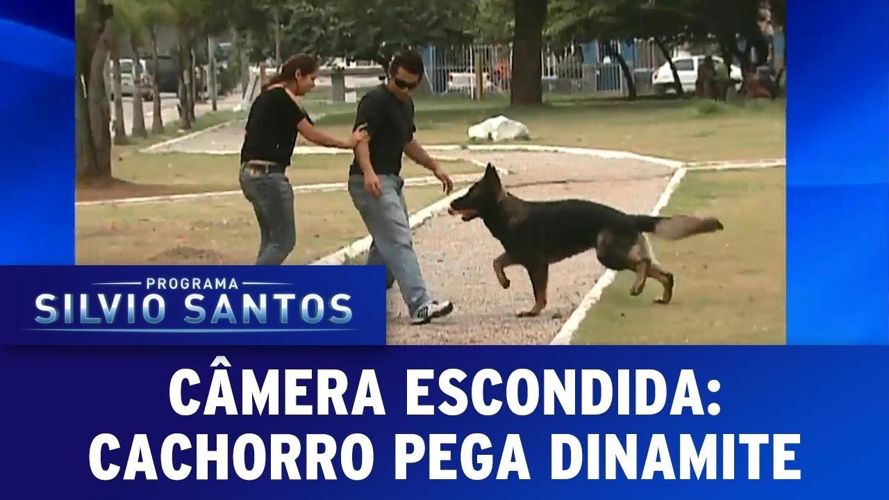 Download Cachorro pega dinamite | Programa Silvio Santos (12/03/17)