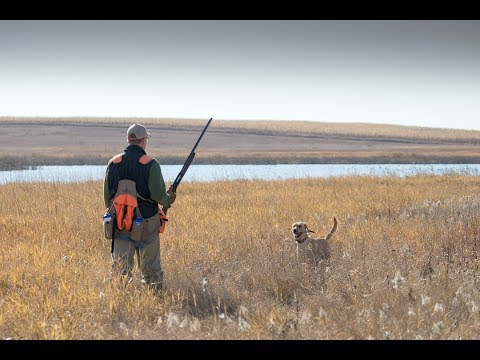 A Bird Dog's First Pheasant Hunt | The Flush: Season 9, Episode #5