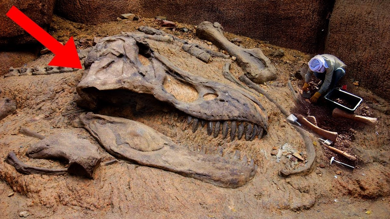 most-amazing-fossil-discoveries-ever