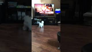 Siopao-Dog barking