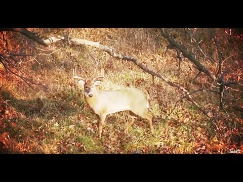 Hunting by Age, Not Antlers   Deer & Deer Hunting TV