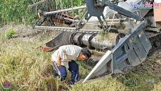 Hết Hồn Khi Thấy Cảnh Này Tài Xế Máy Cắt Nhanh Nhẹn Thoát Hiểm, Kubota Combine Harvester, LADY819