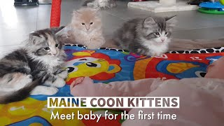 kittens meet baby for the first time