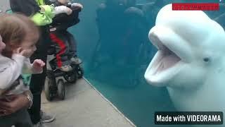 Beluga whale scares kids!!
