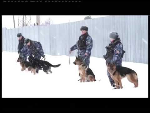 Первоуральские кинологи провели экзамен для служебных собак