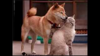 Фонд Помощи Животным в Самаре