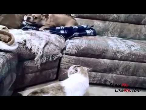 Cat vs Dog Hilarious