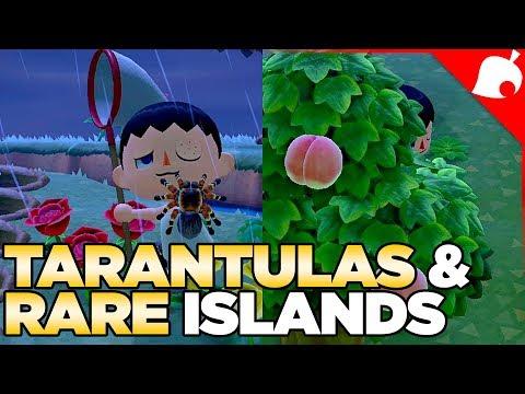 $240,000 of Tarantulas & A Rare Fruit Island in 1 Night! Animal Crossing New Horizons