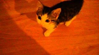 Katzenbaby Miaut für Essen