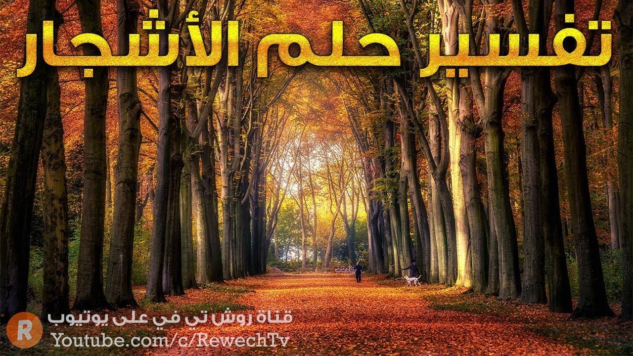 تفسير حلم الأشجار ? - ما معنى رؤية الأشجار في الحلم ؟ - سلسلة تفسير الأحلام