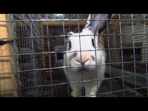 Подросток из Армении открыл собственную ферму с кроликами