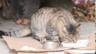 В крае вводится обязательное чипирование собак и кошек