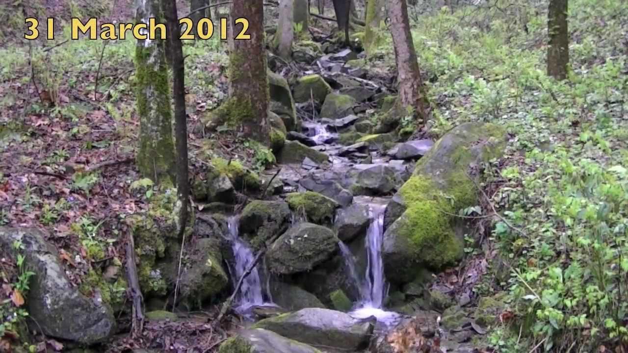 Old sugarlands trail gatlinburg tn webcam