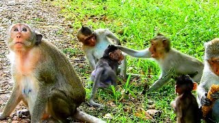Why little monkey not pity on Milto? Small baby fight Milto cos food, This baby stronger #1798