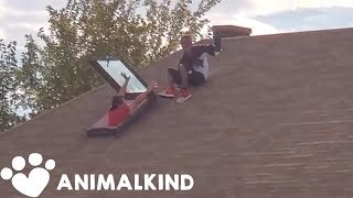 Daring rescue attempt when dog winds up on roof | Animalkind