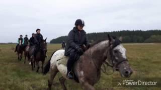 Hubertus 2016 | Sobków | Pogoń za lisem