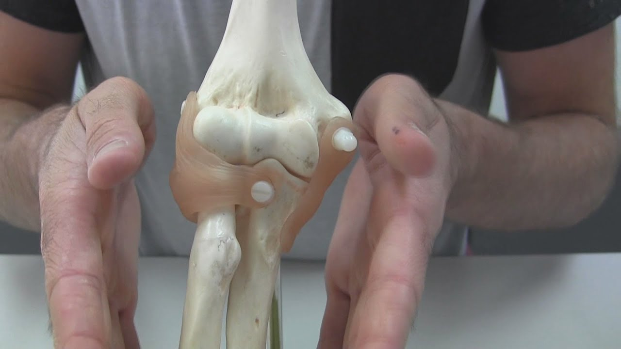 Fucntions Of The Elbow Ligaments Youtube