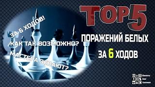 ШАХМАТЫ. ТОП-5 ПОРАЖЕНИЙ БЕЛЫХ ЗА 6 ХОДОВ. ГРОССМЕЙСТЕРЫ ЗЕВАЮТ