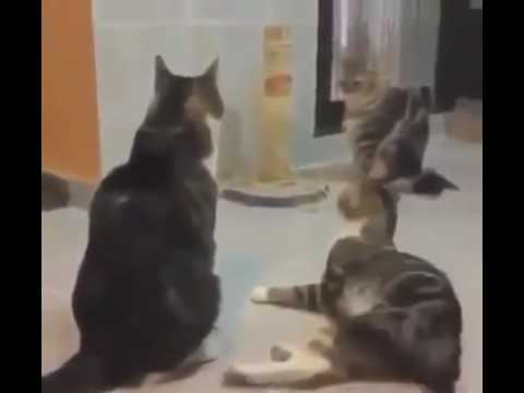 Cats scared by loud spongebob music!!😂