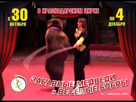 //www.youtube.com/embed/mY409xi3Q-U?rel=0