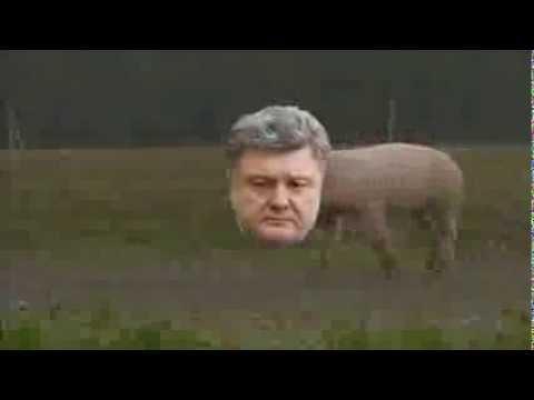 порошенко свинья фото