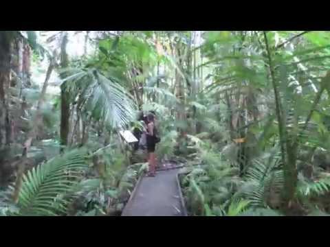 Rainforest Boardwalk in Cairns, Australia
